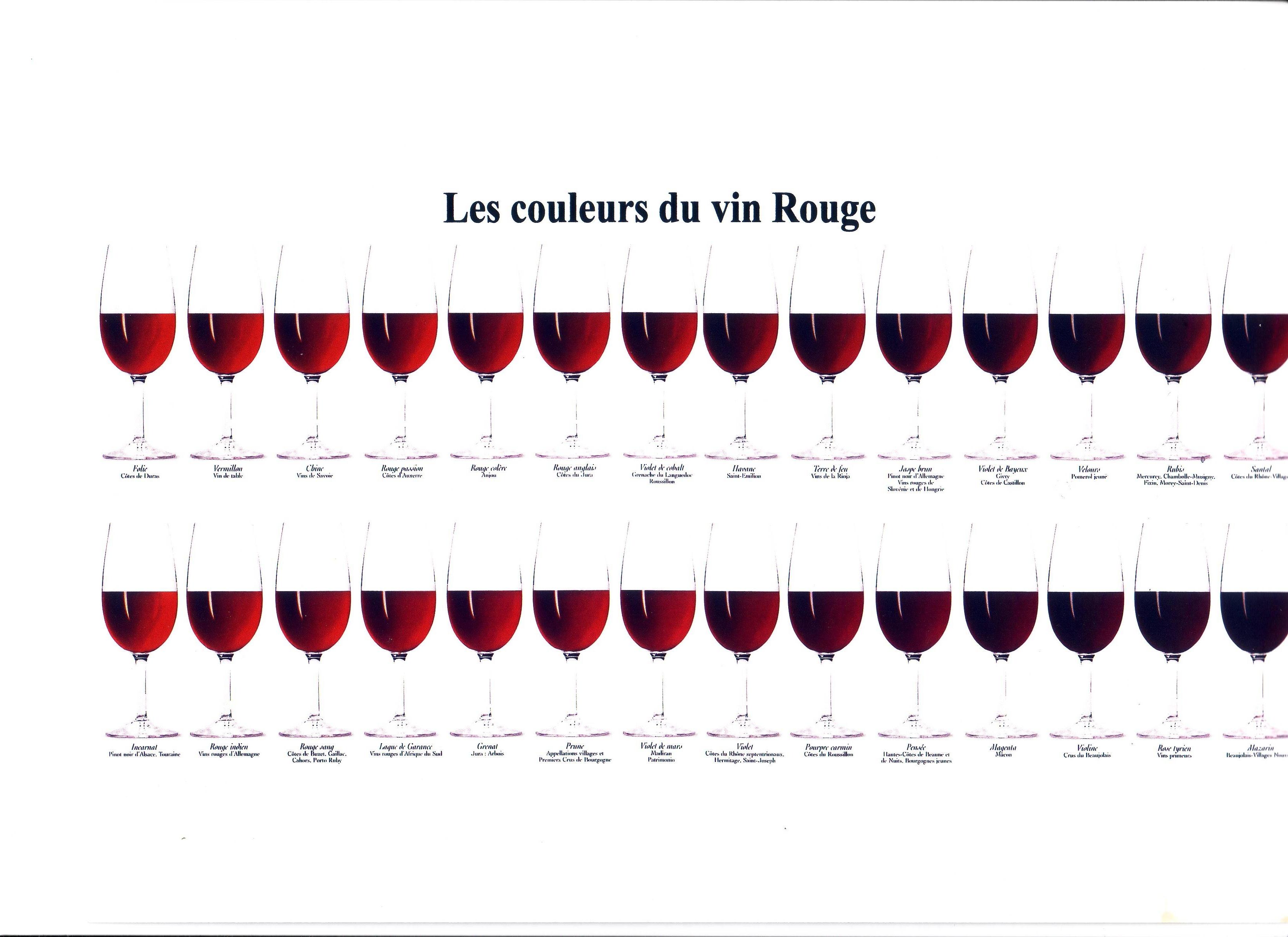 cours sur le vin pdf